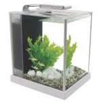 Fluval Spec 10 Litre Aquarium Set White