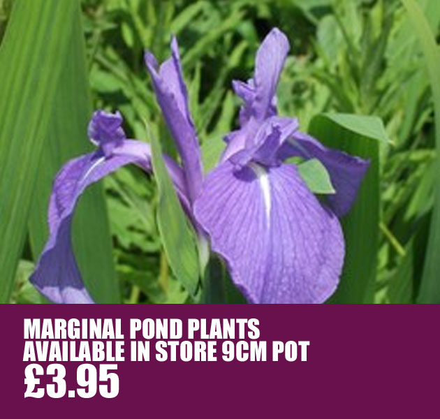 Pond Marginals £3.95